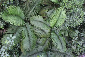 giant-ferns-fr-above