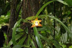 rare-orchid