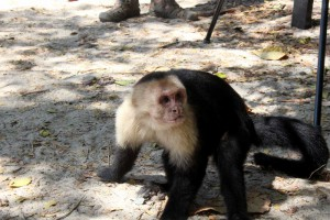 manuel-antonio-monkey-beach