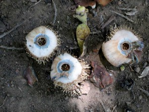 palmera-sur-eyeball-things