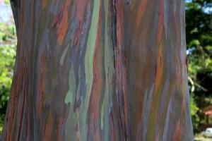 palmera-sur-painter-tree
