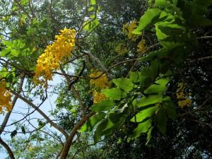 palmera-sur-park-tree