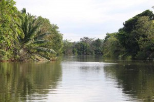 sierpe-riverscape