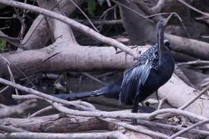 blue-heron-frio-2