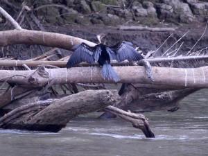 blue-heron-frio
