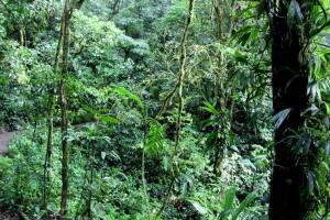 forest-hillside
