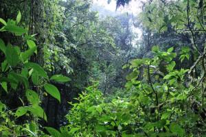 forest-vista