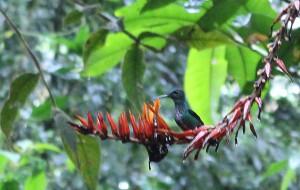 hummingbird-on-red-flower
