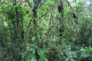 moss-on-trees