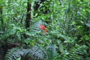 red-flower-4