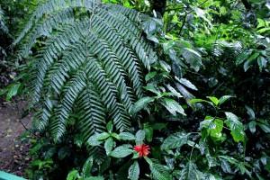 red-flower-fern